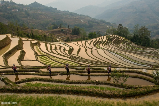rice.terraces